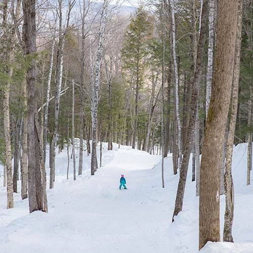 Skiing in the woods